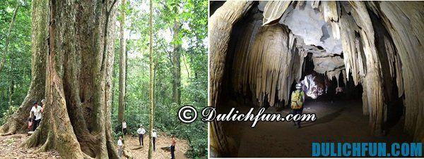 Cây chò chỉ nghìn năm tuổi, động Sơn Cung là những điểm đến rất đẹp trong rừng Cúc Phương