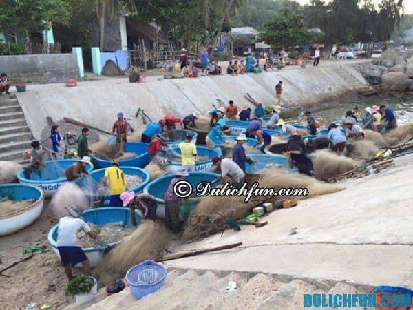 Cuộc sống trên đảo Cù Lao Xanh, bình dị, dân dã