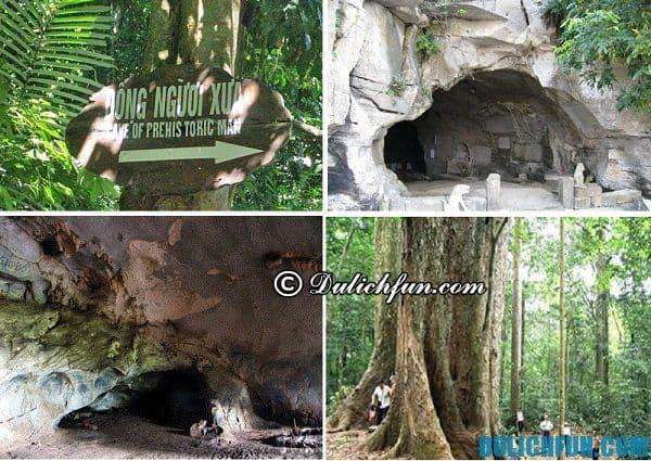 Kinh nghiệm du lịch Cúc Phương, động Người Xưa, cây đăng cổ thụ ở Ninh Bình, điểm thu hút khách du lịch