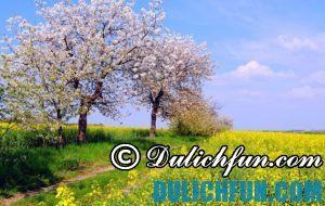 Kinh nghiệm du lịch Đức thuận lợi: du lịch Đức mùa nào đẹp