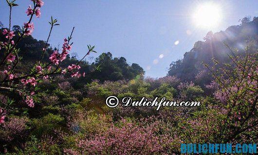 Kinh nghiệm du lịch Sơn La mùa xuân: lịch trình du lịch Sơn La