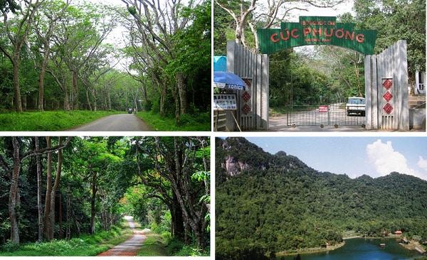 Rừng Quốc gia Cúc Phương khu rừng nguyên sinh rộng lớn, xanh mát với nhiều loài động thực vật quý hiếm đang trở thành điểm đến nổi tiếng khi du lịch Ninh Bình