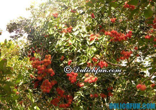 Tổng hợp kinh nghiệm và lịch trình du lịch Đồng Nai: vườn trái cây nổi tiếng ở Đồng Nai