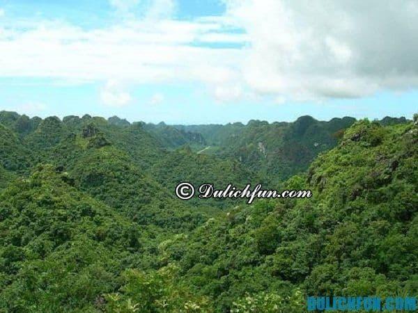 Vườn quốc gia Cát Bà, khu du lịch sinh thái trong lành tươi mát nên ghé thăm dù chỉ một lần