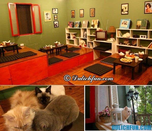Quán cafe nổi tiếng Hà Nội, cafe mèo