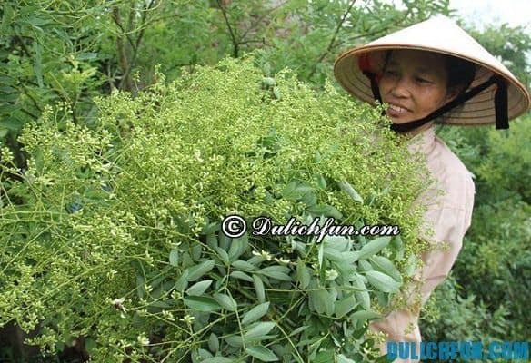 Khám phá Thái Bình quê lúa