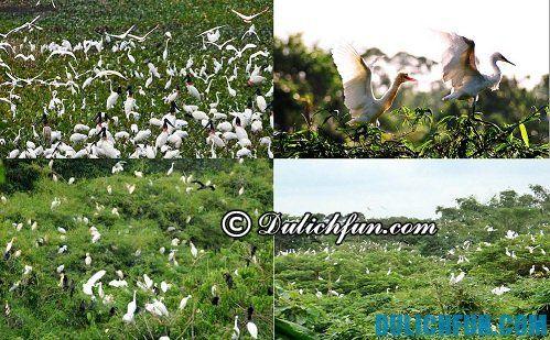Địa điểm du lịch hấp dẫn vườn cò Bằng Lăng