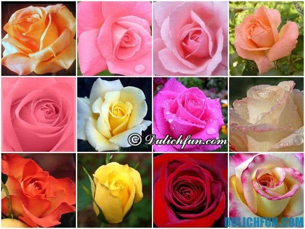 Đà Lạt xứ sở ngàn hoa