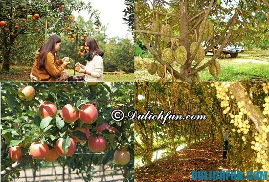 Địa điểm du lịch nổi tiếng nhất Bến Tre hiện nay: Vườn trái cây Cái Mơn
