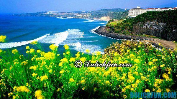 Kinh nghiệm du lịch đảo Jeju - những điểm đến nổi tiếng ở đảo Jeju. Du lịch đảo Jeju nên đi đâu chơi?