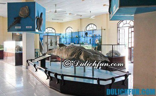 Du lịch nha trang nên đi đâu chơi? những địa điểm du lịch nổi tiếng, tuyệt đẹp ở Nha Trang