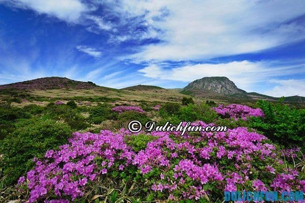 Những điểm du lịch nổi tiếng ở đảo Jeju