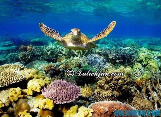 Hoạt động vui chơi nghỉ dưỡng khi đi du lịch Côn Đảo