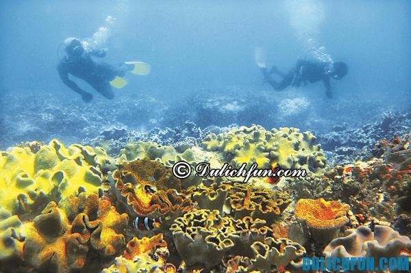 Khám phá đảo Cù Lao Chàm, lặn ngắm những rạn san hô dưới đáy biển muôn màu, muôn vẻ