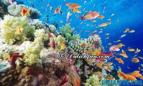 Lịch trình du lịch đảo Phú Quý: Hoạt động vui chơi nổi tiếng ở đảo Phú Quý