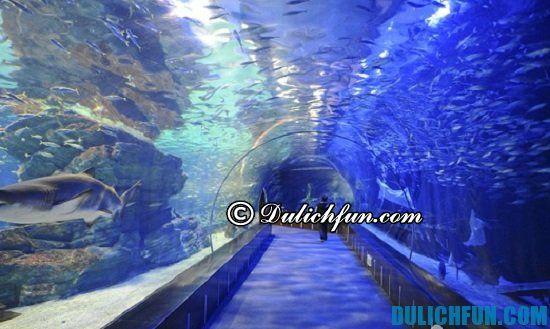 Viện hải dương Busan Aquarium, cùng khám phát điểm tham quan du lịch đẹp, nổi tiếng ở Busan