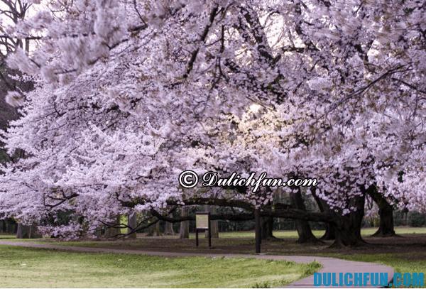 Địa điểm ngắm hoa anh đào đẹp nhất ở Tokyo: Nơi ngắm hoa anh đào nổi tiếng ở Tokyo
