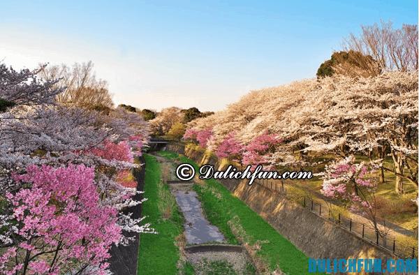 Du lịch Tokyo ngắm hoa anh đào. Điểm ngắm hoa anh đào hấp dẫn ở Tokyo