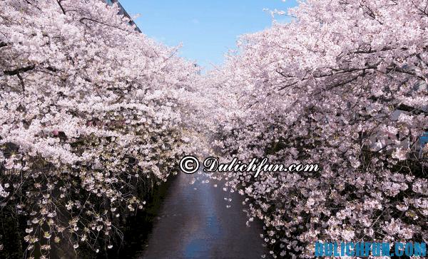 Điểm ngắm hoa anh đào ở Tokyo hấp dẫn khách du lịch: Vườn hoa anh đào có phong cảnh đẹp nhất ở Tokyo