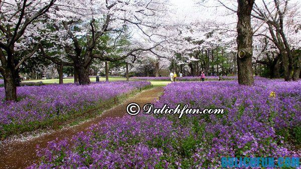 Những khu vườn ngắm hoa anh đào nổi tiếng ở Tokyo: nơi ngắm hoa anh đào miễn phí ở Tokyo