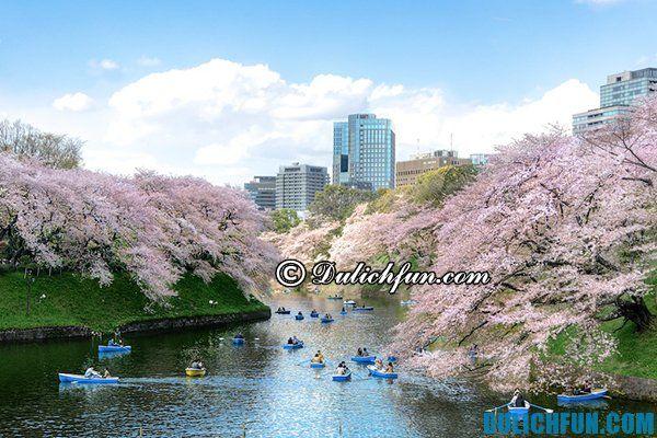 Những nơi ngắm hoa anh đào đẹp nhất Tokyo. Những vườn hoa anh đào chụp ảnh đẹp nhất ở Tokyo