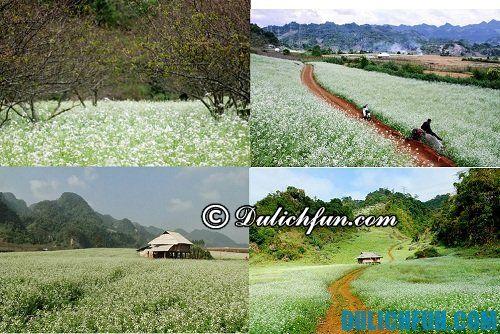 Du lịch phượt Mộc Châu: địa điểm đẹp để ngắm hoa cải trắng