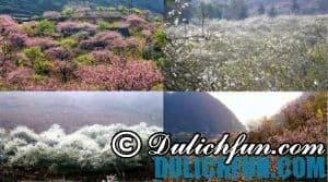 Du lịch Mộc Châu thời điểm nào đẹp nhất trong năm: Thời điểm du lịch đẹp vào tháng 2, 3 ngắm hoa đào, mận nở rộ