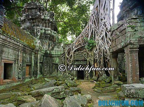 Kinh nghiệm du lịch khám phá Angkor Wat lịch trình chi tiết cụ thể: khám phá đền Ta Prohm ấn tượng, độc đáo