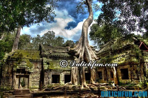 Hướng dẫn du lịch khám phá Angkor Wat tự túc, chi tiết: khám phá đền Ta Prohm đặc biệt
