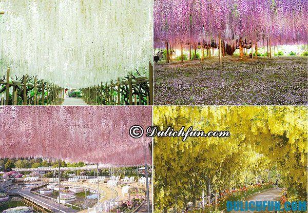 Những điểm ngắm hoa tử đằng đẹp nhất Nhật Bản: Địa chỉ vườn hoa tử đằng nổi tiếng ở Nhật Bản
