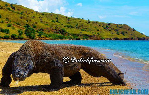 ĐIểm du lịch hấp dẫn nhất Indonesia. Đảo Komodo hòn đảo nổi tiếng nhất Indonesia