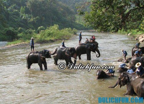 Những điểm đến hấp dẫn, nổi tiếng ở Chiang Mai