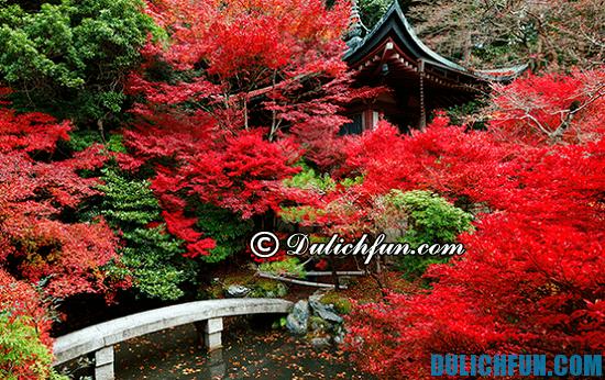 Đi du lịch Tokyo mùa nào đẹp nhất? Thời điểm nên đi du lịch Tokyo