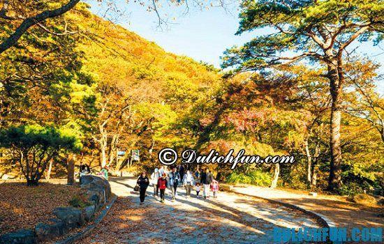Đi du lịch Busan vào mùa nào đẹp nhất? Thời điểm thích hợp nên đi du lịch Busan, Hàn Quốc.