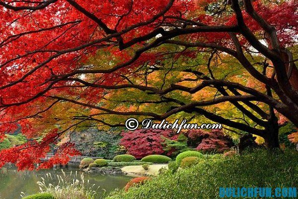 Top địa điểm đẹp nổi tiếng ở Tokyo Nhật Bản: Nơi chụp ảnh, ngắm cảnh đẹp nhất Tokyo
