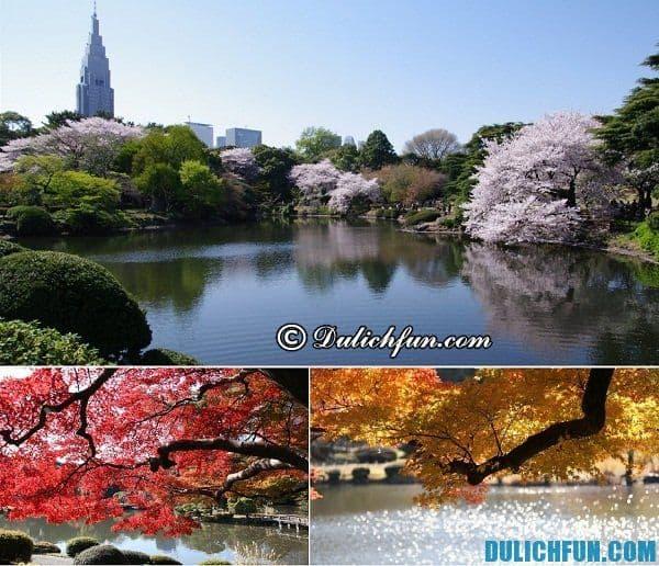 Điểm đến không thể bỏ qua ở Tokyo Nhật Bản: Tokyo có địa điểm du lịch nào phong cảnh đẹp