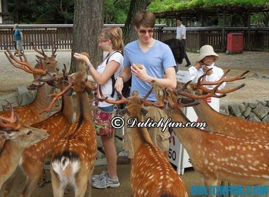 Đi đâu khi du lịch Nara? Công viên Nara, địa điểm tham quan, du lịch nổi tiếng nhất ở Nara