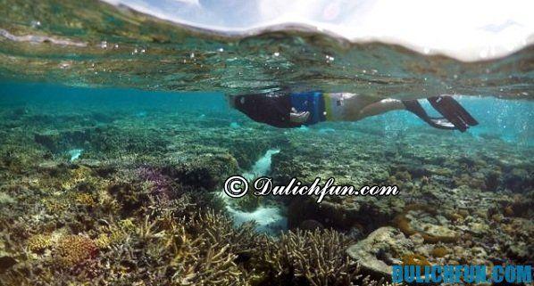 Great Barrier Reef, điểm danh những địa danh du lịch nổi tiếng tại Úc. Những điểm đến nổi tiếng, hấp dẫn ở Úc