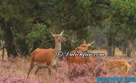 Chơi đâu khi du lịch Hà Lan? Công viên Quốc gia Hoge Veluwe, địa điểm tham quan, du lịch nổi tiếng ở Hà Lan - Kinh nghiệm du lịch Hà Lan giá rẻ