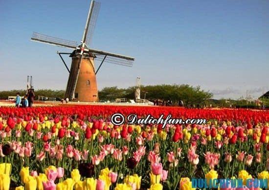 Cẩm nang kinh nghiệm du lịch Hà Lan đầy đủ, từ A đến Z: Hướng dẫn tour du lịch Hà Lan giá rẻ