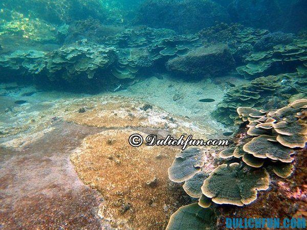 Điểm vui chơi giải trí ở đảo Thổ Chu. Cẩm nang phượt đảo Thổ Chu