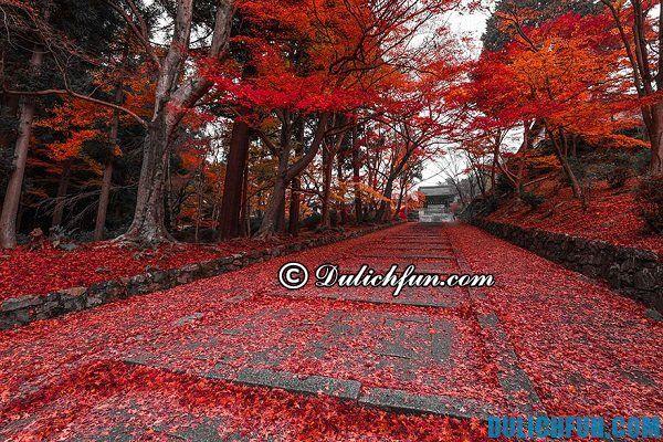 Kinh nghiệm du lịch Kyoto. Thời điểm tốt nhất để du lịch Kyoto