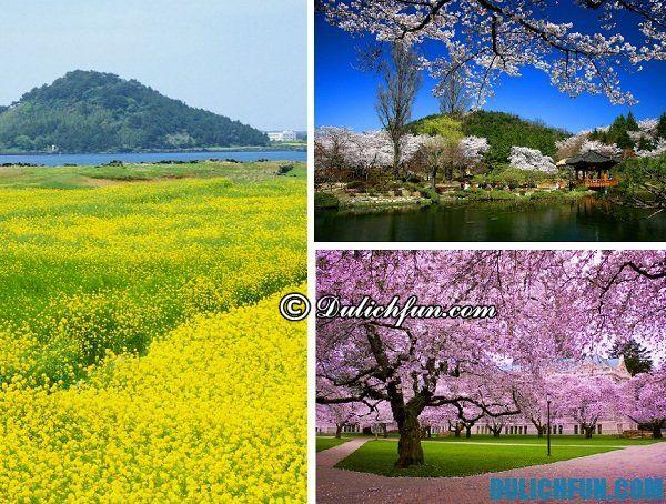 Thời điểm đẹp nhất du lịch Hàn Quốc. Nên đi du lịch Hàn Quốc mùa nào, tháng mấy?