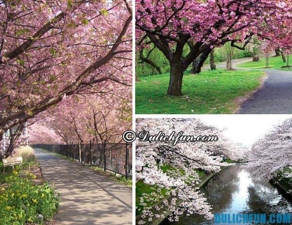 Thời điểm đẹp nhất du lịch Nhật Bản
