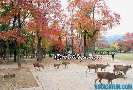 Du lịch Nara mùa nào đẹp nhất? Mùa thu, thời điểm du lịch Nara lý tưởng