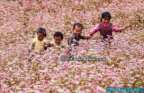 Du lịch Hà Giang mùa tam giác mạch: Đến Hà Giang ngắm hoa tam giác mạch nở