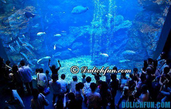 Thủy cung Kaiyukan, điểm tham quan du lịch nổi tiếng ở Osaka. Khám phá các địa điểm tham quan du lịch nổi tiếng ở Osaka