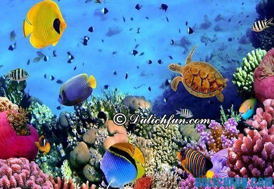 Chơi gì khi du lịch trên đảo Sentosa? Một số điểm vui chơi, giải trí hấp dẫn, thú vị trên đảo Sentosa