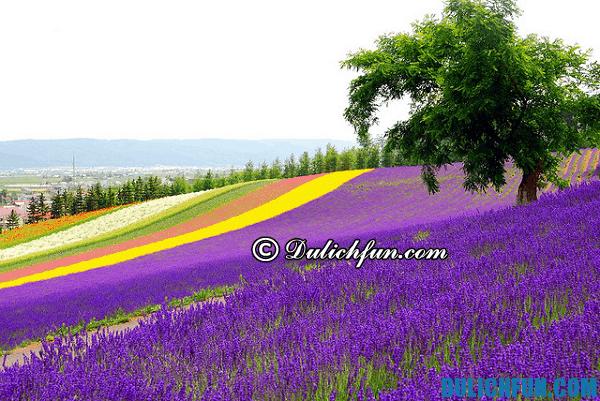 Du lịch Hokkaido có gì đẹp? Những điểm du lịch,tham quan nổi tiếng của Hokkaido