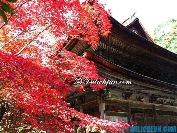 Du lịch Nagoya có gì hay? Những điểm tham quan, du lịch đẹp nổi tiếng ở Nagoya